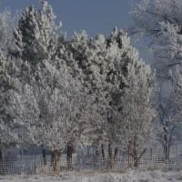 Winter Morning on ATI Farms